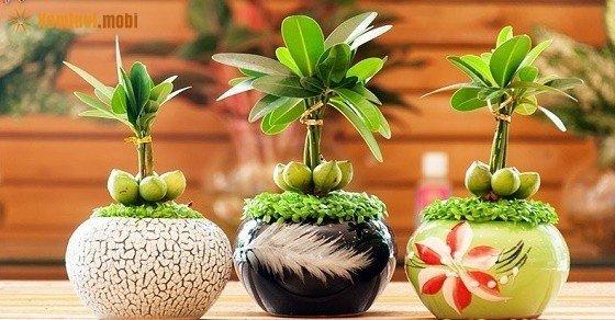 Trồng cây phong thủy trong nhà thêm thịnh vượng, phát lộc