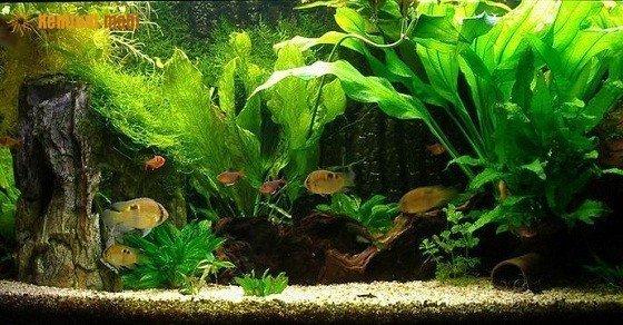 Bể cá phong thủy trong nhà