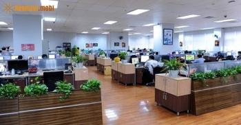 Các loại cây xanh phong thủy văn phòng tăng tài lộc thịnh vượng