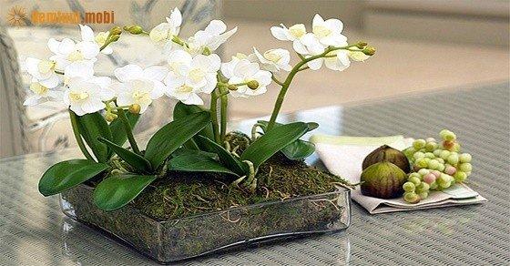 Phong thủy hoa lan mang sức mạnh tự nhiên mạnh mẽ