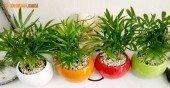 Người mệnh Mộc nên trồng cây gì cho hợp phong thủy?