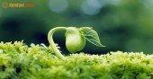 Mệnh Thủy hợp với cây gì? Chọn cây phong thủy cho người mệnh Thủy