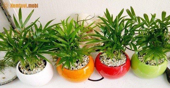 Người mệnh Mộc nên trồng cây gì