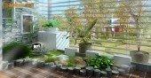 Mệnh Hỏa nên trồng cây gì – Cách bài trí cây xanh trong nhà đón tài lộc