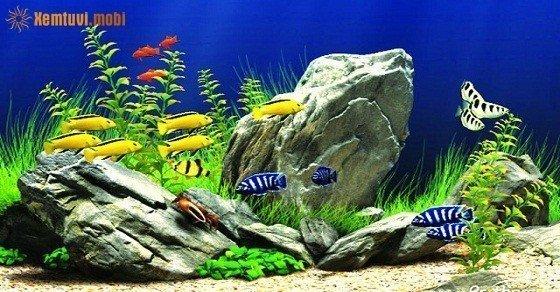Những người mệnh Thổ có nên đặt bể cá trong nhà không