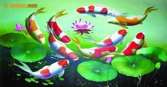 Xem người mệnh Thủy có nên nuôi cá không, nuôi cá gì sẽ có thêm lộc