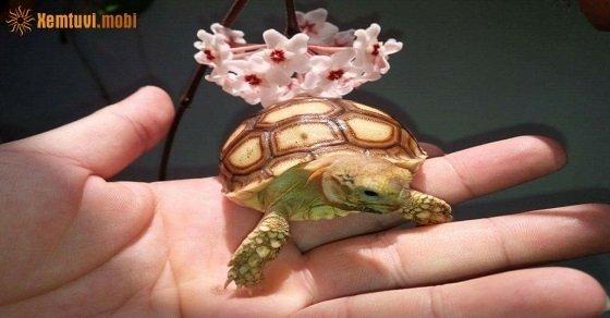 Cách nuôi rùa cảnh theo phong thủy trong nhà