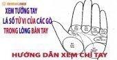 Vị trí gò Kim Tinh và cách xem bói gò Kim Tinh trên lòng bàn tay