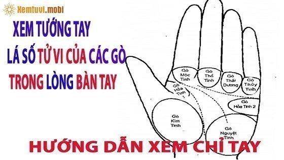 Vị trí gò Kim tinh trên bàn tay có ý nghĩa gì?