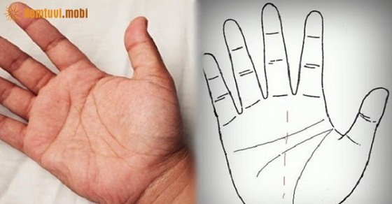 Xem chỉ tay, bói chỉ tay cơ bản, nhân tướng học chỉ tay