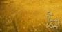 Mệnh Sa Trung Kim là gì, sinh năm bao nhiêu, hợp màu gì, mệnh nào?