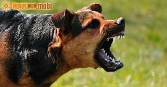 Giải mã chiêm bao giấc mơ thấy chó có điềm báo gì