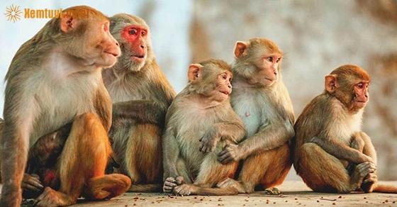 Nằm mơ thấy khỉ đánh con gì chuẩn nhất?