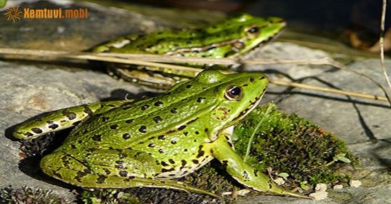 Giải mã giấc mơ thấy ếch là điềm gì?