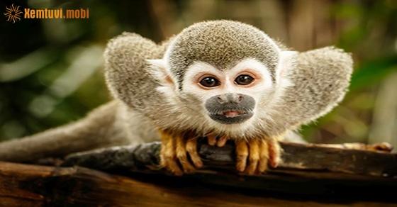 Chiêm bao thấy con khỉ là điềm tốt hay xấu?