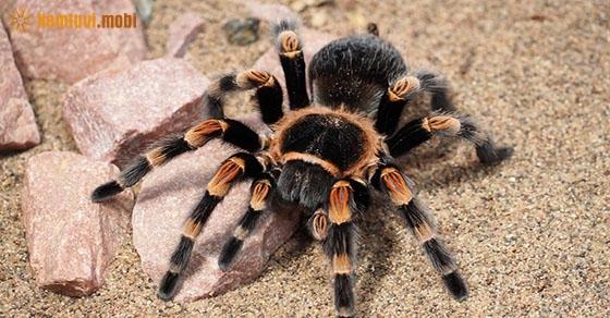 Giấc mơ thấy nhện, ý nghĩa và điềm báo?