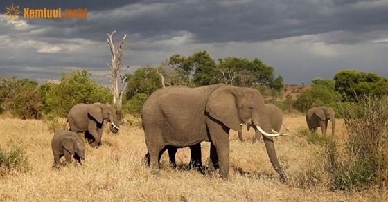Giải mã giấc mơ thấy voi là điềm gì?