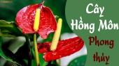 Cây Hồng Môn hợp với tuổi nào, hợp mệnh gì? Ý nghĩa cây Hồng Môn trong phong thủy