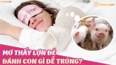 Mơ thấy lợn đẻ đánh con gì? Giải mã chiêm bao thấy heo đẻ là điềm báo gì?