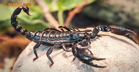 Chiêm bao thấy bọ cạp là điềm lành hay dữ?