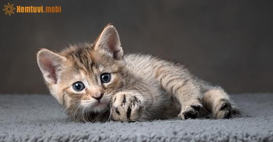 Nằm mơ thấy mèo đánh con gì chuẩn nhất?