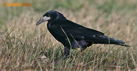 Nằm mơ thấy quạ đen đánh con gì chuẩn nhất?